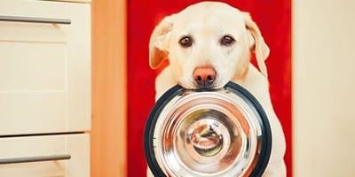 4 regole d'oro per una dieta adatta alle esigenze dei cani
