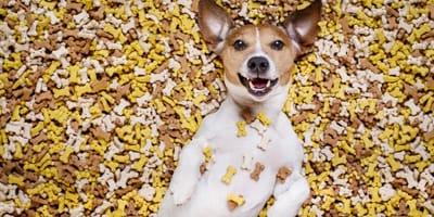 Cómo poner fin a la sobrealimentación en perros