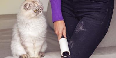 Cómo quitar pelos de gato de la ropa: los trucos más eficaces