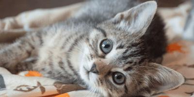 Ginger kitten and Tabby kitten