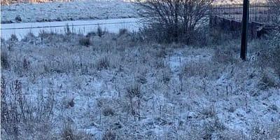 cane-dalmata-invisibile-nella-neve