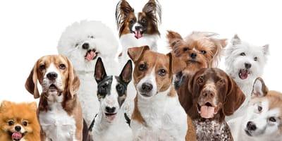 Test de personalidad para perros: ¡averigua qué perfil tiene el tuyo!