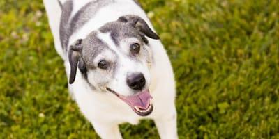 CDU will Hundesteuer abschaffen, aber nur für bestimmte Vierbeiner