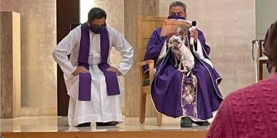 Torreón: el perrito del padre no se quiere quedar solo, así que se lo lleva a dar misa