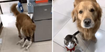 video viral de perro y gato en youtube