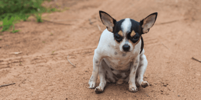 Why does my dog drag his butt? Here's how to stop the scooting