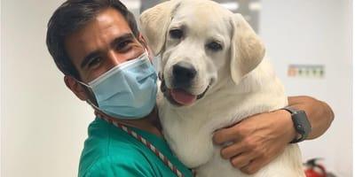 """Weterynarz, który czyni cuda podbija serca i sieć: """"Pies nawet nie zauważył, że dostał zastrzyk!"""""""