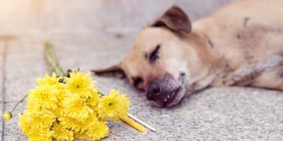 Cane morto accanto a un mazzo di fiori gialli