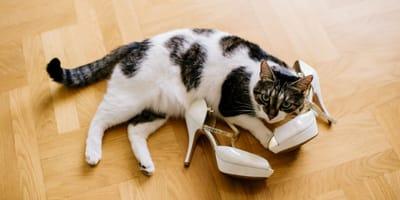Perché il gatto annusa le scarpe? I principali motivi