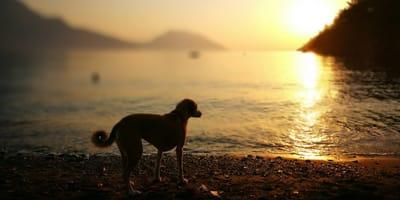 Tamaulipas: estas son las playas a donde puedes ir con tu perro