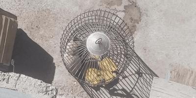 Ve una jaula de pájaros colgada: al mirar con atención lo que hay adentro se le rompe el corazón