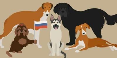Razas de perros rusos: desde el husky siberiano hasta el toy ruso