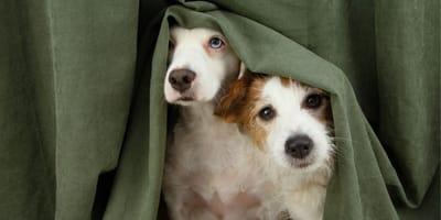 I 7 tipi di ansia del cane secondo la scienza