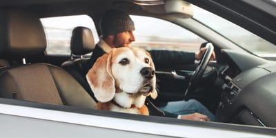 Darf der Hund auf dem Beifahrersitz mitfahren?