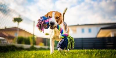 10 juegos para entretener a tu perro en casa