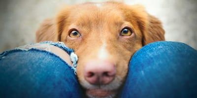 Perro comunicándose con su dueña