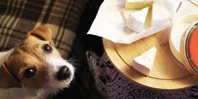 ¿Los perros pueden comer queso?