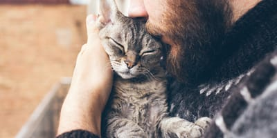 Gato con pulgas abrazando a un humano
