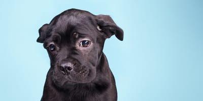 Depresión en perros: síntomas, causas y tratamiento