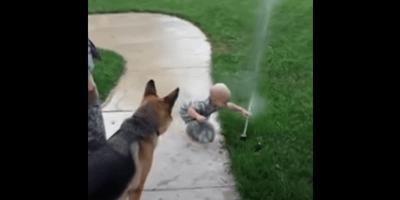 pastor aleman y bebé