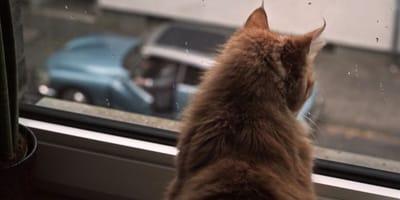 Tatort Köln: Szene mit Katze treibt Millionen die Tränen in die Augen