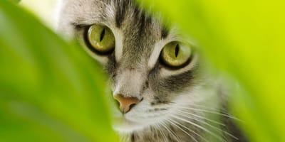 Które rośliny są bezpieczne dla kota? Lista