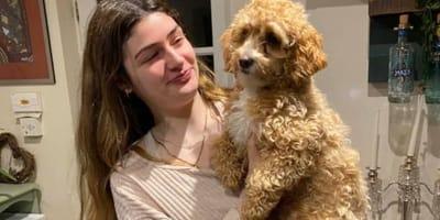 Woman holds Maltipoo dog