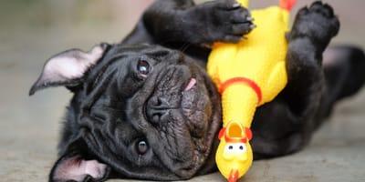 ¿Son buenos los juguetes chillones para perros?
