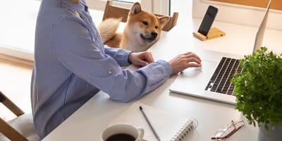 Teletrabajar con mascotas: recomendaciones generales