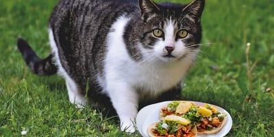 ¿Los gatos pueden comer tortilla o les hace mal?