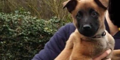 Zaatakowano opiekuna szczeniaka malinois. Kilka dni później mężczyzna zobaczył szokujący post na Facebooku