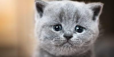 Weder männlich noch weiblich: Kätzchen droht schlimmes Schicksal