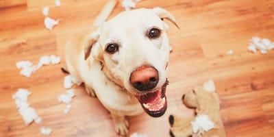 Probióticos para calmar la ansiedad en perros