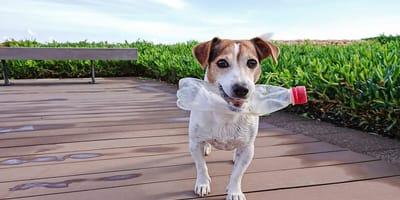 ¿Qué hago si mi perro comió plástico?