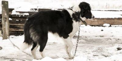 Familie setzt Hund an Tankstelle aus: Mit seiner Rache hat niemand gerechnet