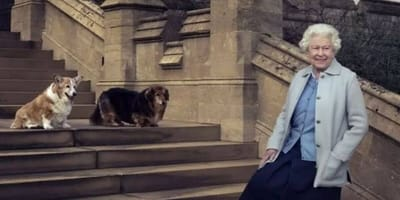The Queen standing on steps with two Corgis