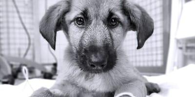 Ero così carino, ma sono morto: la lettera d'addio di un cucciolo