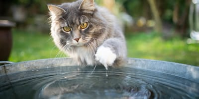 Why do cats hate water?