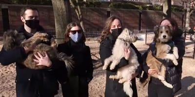 Każdy został adoptowany przez inną osobę. Psi bracia odnaleźli się w wyniku niewiarygodnego przypadku!