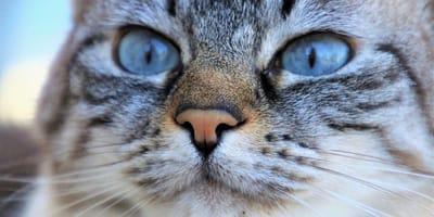 I sintomi delle malattie respiratorie del gatto più comuni