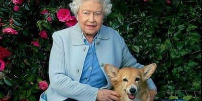 regina e Corgi