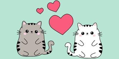 Los nombres más kawaii para gatos hembras y machos