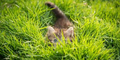 Junge Katze im hohen Gras