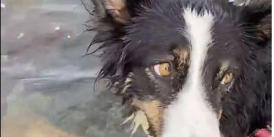 Cane-bianco-e-nero-nellacqua