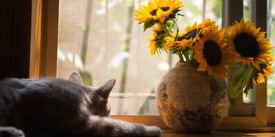 gato y flores