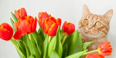 Poner un bonito ramo de flores en el salón de casa: peligro para nuestros gatos