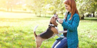 Come insegnare al cane il richiamo? Cosa fare e cosa no