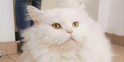 Poznań. Zagubiony kot odnajduje się w absolutnie niewiarygodnym miejscu!