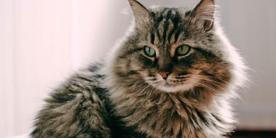 How old is my cat in human years? Find out with our cat age calculator