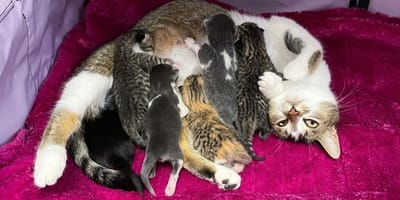 Gatta allatta i suoi cuccioli